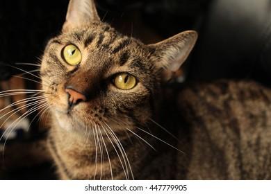 Cat begging for food
