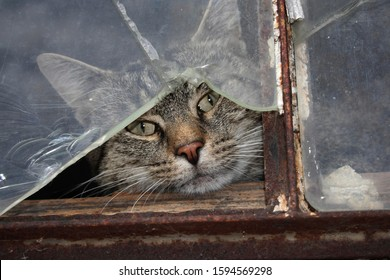 Cat behind a broken pane of glass