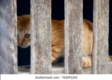 Cat Behind Wooden Cage