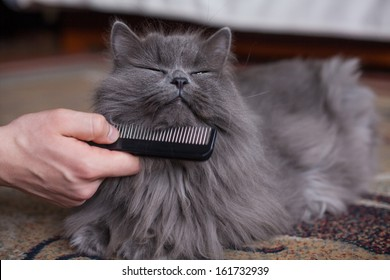 Cat is being combed.