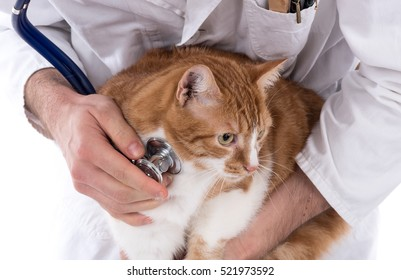 Cat being examined at the vet clinic