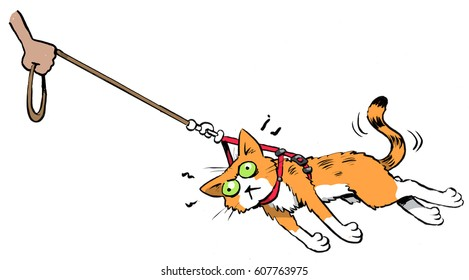 a cat being pulled along on a leash