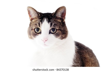 cat with big beautiful eyes
