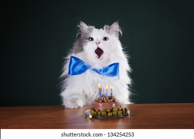 cat and birthday cake with candles