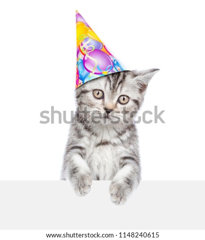 Cat In Birthday Hat Above White Banner Isolated On Background