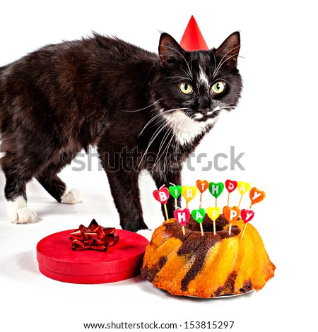 Cat With Birthday Hat Cake And Gift Isolated On White
