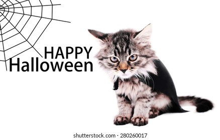 Cat in black cloak, isolated on white