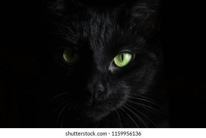CAT  BLACK  GREEN EYED