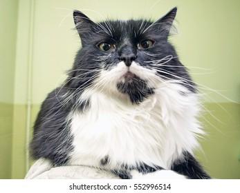 cat. black and white. portrait