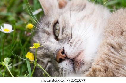 A cat blink an eye  lying on the grass