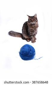 Cat with blue balls of wool on a white background