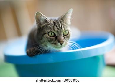 Cat in blue bath tub