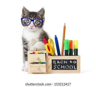 Back to School Cat Stock Photos, Images & Photography | Shutterstock