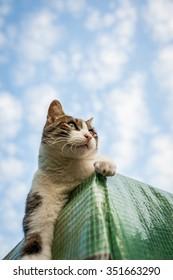 A cat with blue sky
