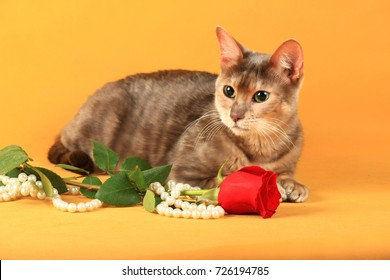A cat of the blue-blue Toyger breed lies near the flower and pea