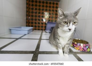 Cat boarding in pet hotel