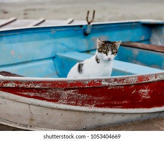 Cat In Boat. Small village cat using the dinghy on the beach as his home. Stock Photo.