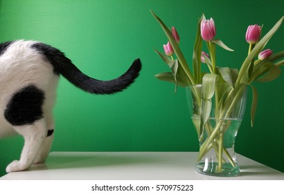 cat and bouquet of pink tulips on white table in front of green background