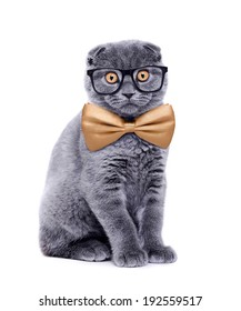 cat with a bow tie and glasses on white background