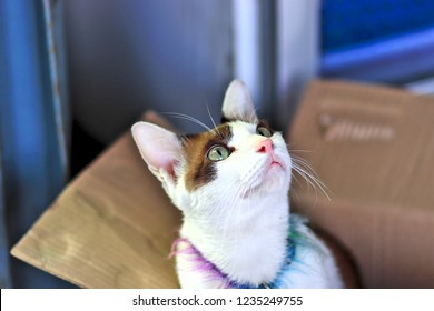 A cat in a box looking up. The cat has a pink nose and brown hairs.And white