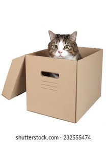 cat in a box on a white background in studio