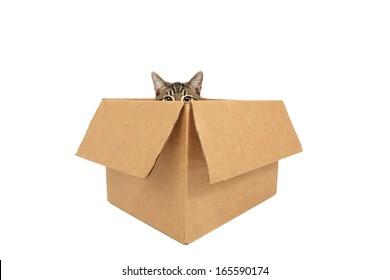 Cat in a box peeking out