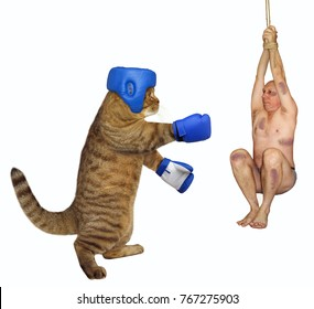 The cat boxer uses a man instead of a punching bag. White background.