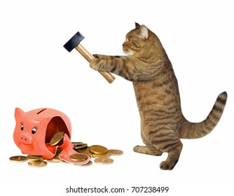 The cat broke a piggy bank with a hammer. White background.