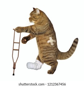 The cat with the broken leg uses the crutch. White background.