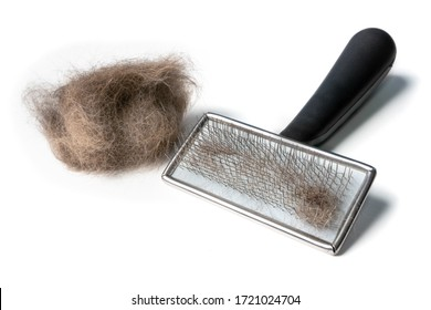 Cat brush with cat hair clump on the side. Wire bristle grooming brush. Fur stuck to comb. Brush out knots and remove middle, under or winter coat. Long hair cat maintenance. Isolated on white.