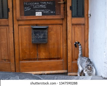"""a cat by a door into a small take-away italian restaurant with an inscription """"we fry everything except air"""""""