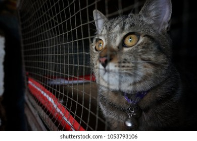 Cat in cage - Cruelty to animals