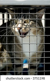 A cat in a cage meowing to be let out