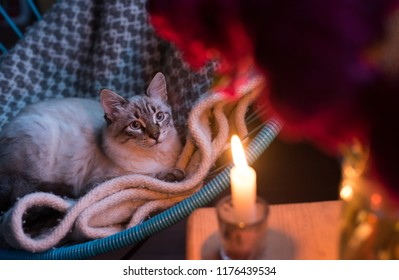 cat in candle lights
