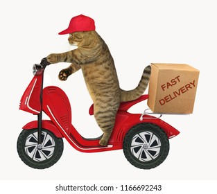The cat in a cap delivers a box by the red scooter. White background.
