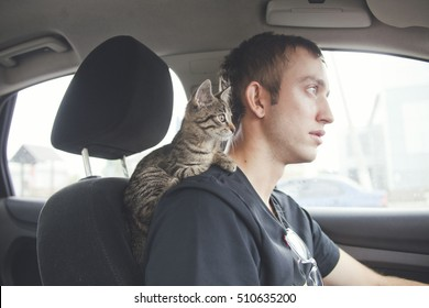 Cat in car. Kitten on driver's shoulder