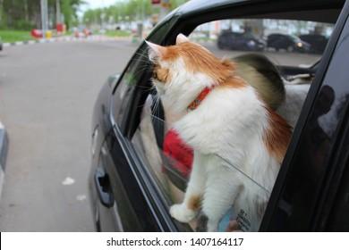 Terrific Imagenes Fotos De Stock Y Vectores Sobre Cat Car Window Evergreenethics Interior Chair Design Evergreenethicsorg