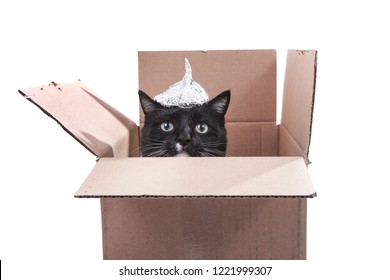 Cat in a cardboard box wearing a foil hat