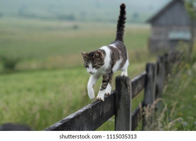 cat carefully walking over the tin wooden fence