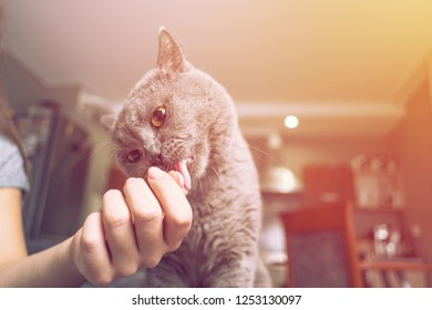cat caresses about the hand of a woman, close up of cat, happy cat, owner is stroking the cat, sniffs the owner's finger