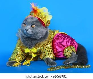 Cat in a carnival costume.