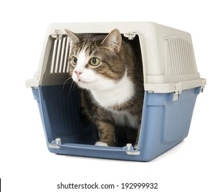 cat in carrying on a white studio background