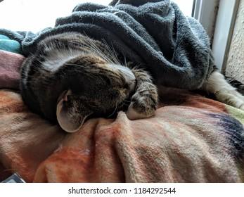 cat cats relaxing sleeping