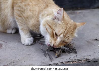 a cat caught a bird and eats its prey