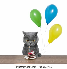 Cat celebrating birthday with piece of cake and balloons -- isolated on white background