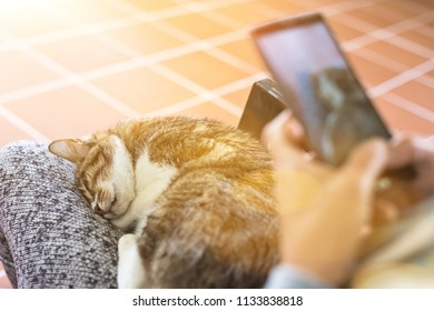 cat with cellphone, old cat sit on a woman's thigh.