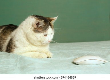 cat chasing computer mouse