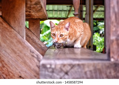 Cat chasing mice at the wooden stairs, blurred images.