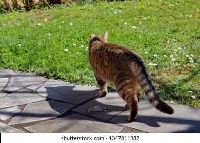 a cat chasing a mouse