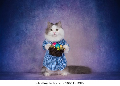 cat in checkered shirt celebrates Easter